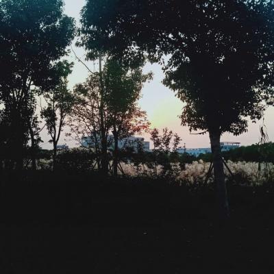 皆是我所认为美丽的风景....
