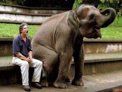 动物与人类和谐一幕!