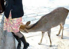 小麋鹿也好这口,口渴得很