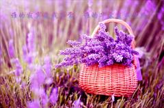 紫色意境唯美图片_浪漫紫色的意境美