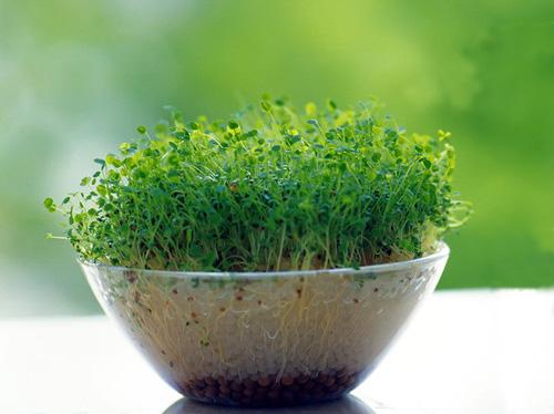绿色小清新唯美意境_那一抹绿甚是惹眼