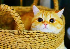慵懒小橘猫生活图片_懒懒的橘色小猫咪