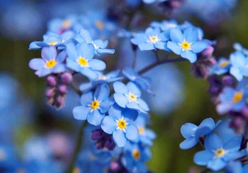 美好漂亮花朵空间背景_漂亮美好的花朵