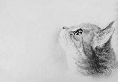 简单可爱手绘猫咪图片_超萌的手绘猫咪