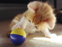 可爱萌猫咪素材图片_小巧可爱的模样