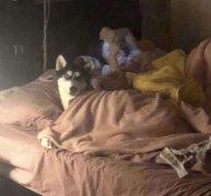 狗子:我睡了你的床