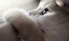 迷人可爱猫咪图片_慵懒呆萌猫咪