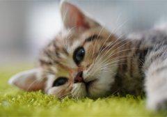 可爱猫咪清新图片_呆萌可爱的猫咪